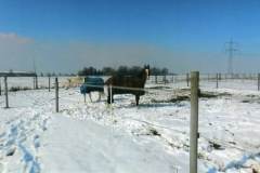 windhof_b_12